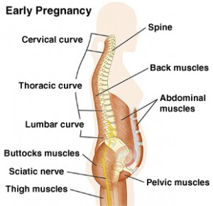 early-pregnancy